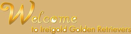 Welcome to Ireigold Golden Retrievers